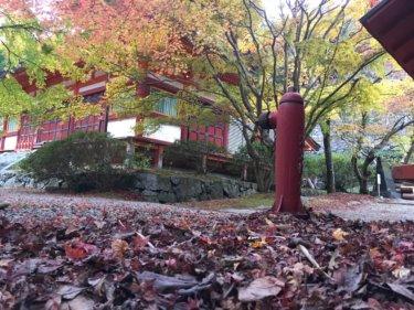 談山神社の落ち葉